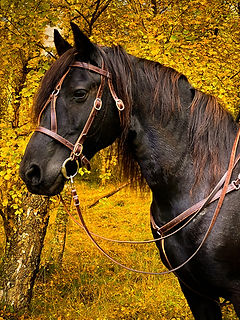 Breagha Autumn1small.jpg