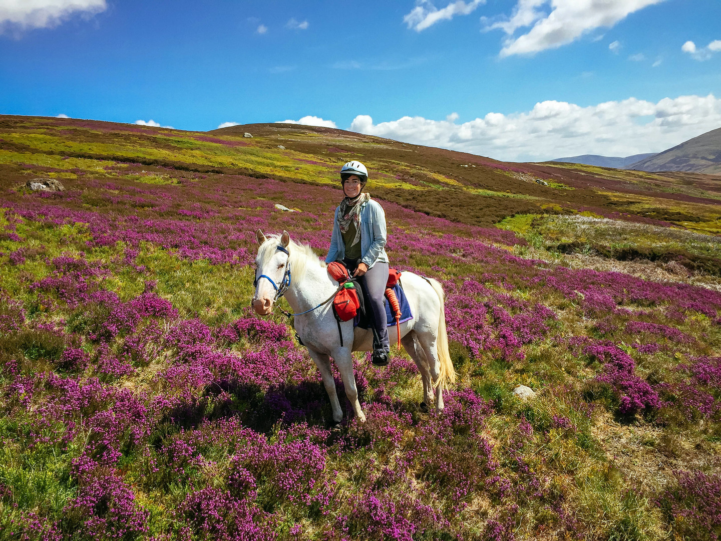 Magic in the heather