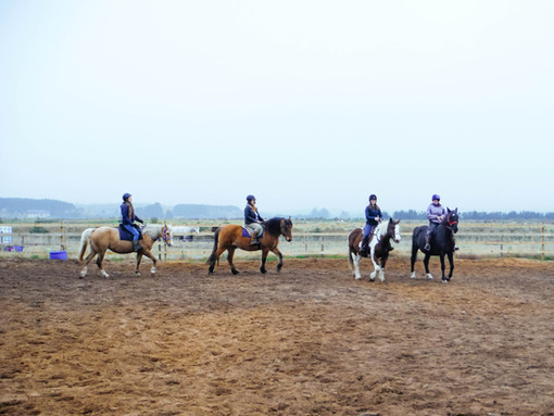 Group riding lessons in the school