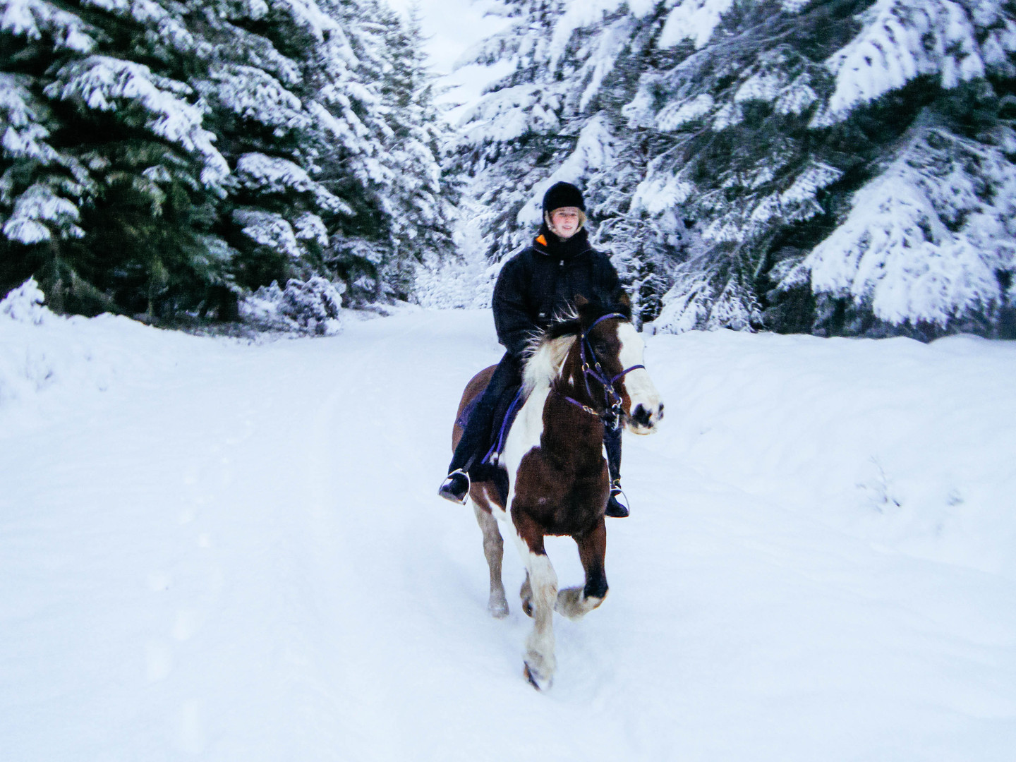 Cantering through a snowy forest on Annie