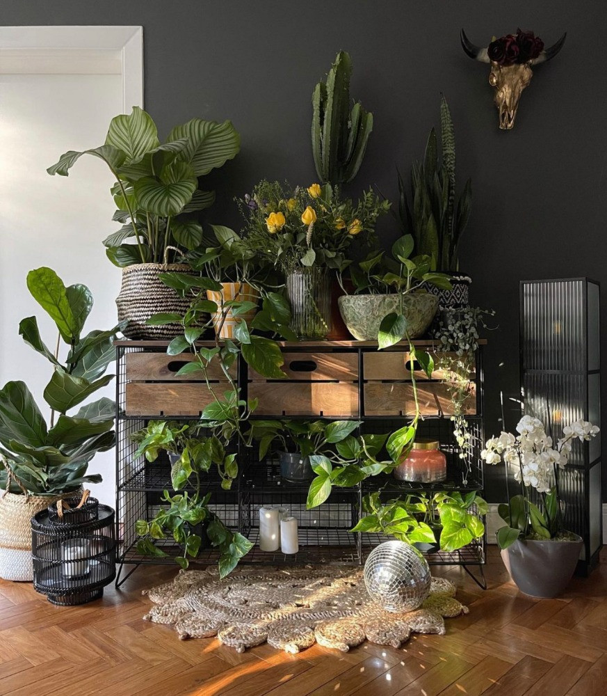 styling house plants on industrial cabinet vary heights add glitterball
