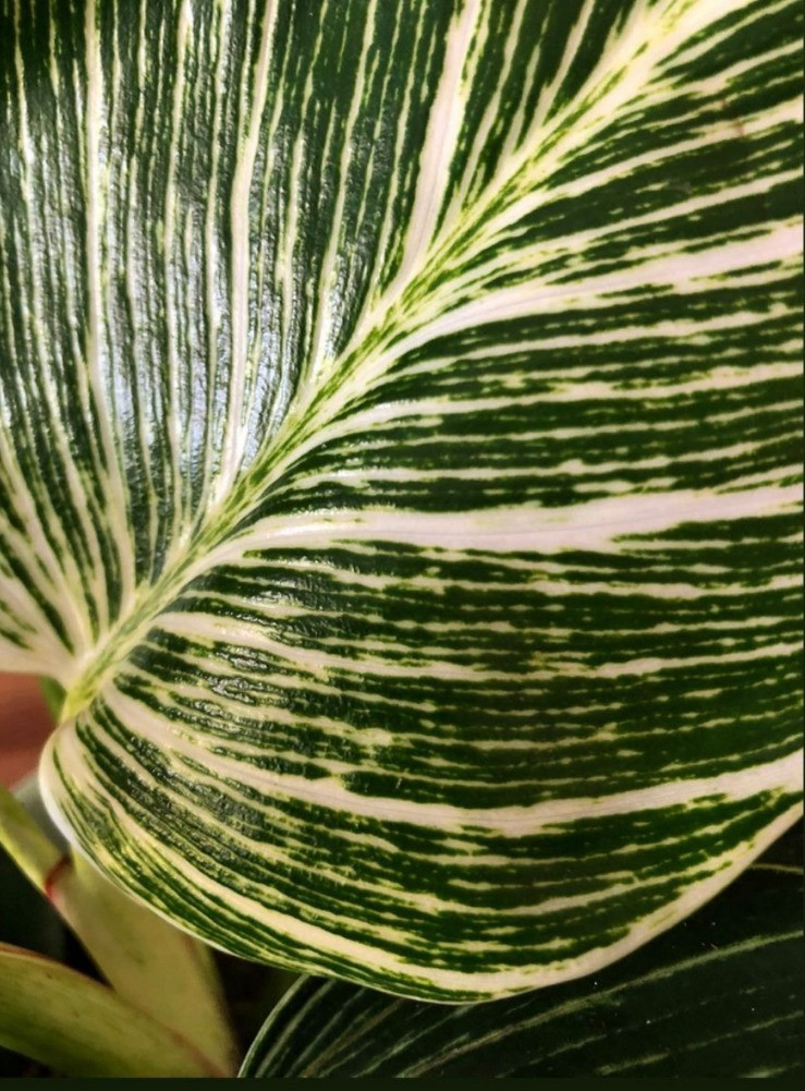 plant leaf detail