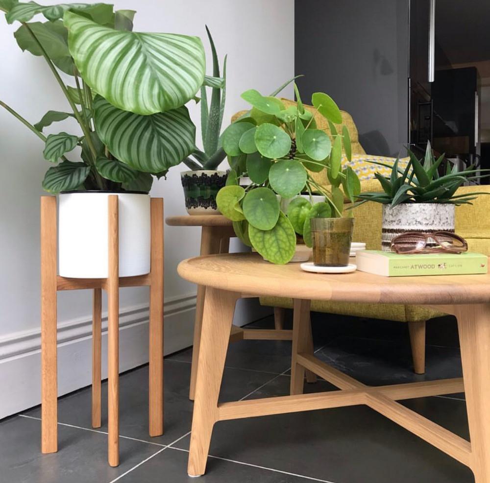mid-century modern oak coffee table house plants
