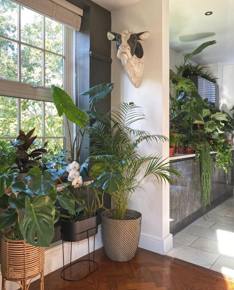 styling house plants mix planters