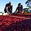 Thumbnail: ホンジュラス ラ フロレンシア農園