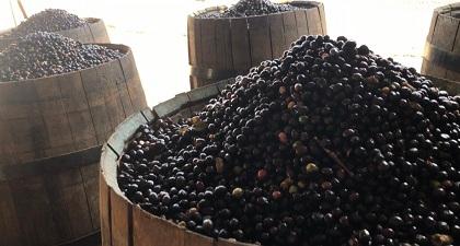ブラジル ハンショグランデ農園 ワインバレル アナエロビック(200g)※数量限定品