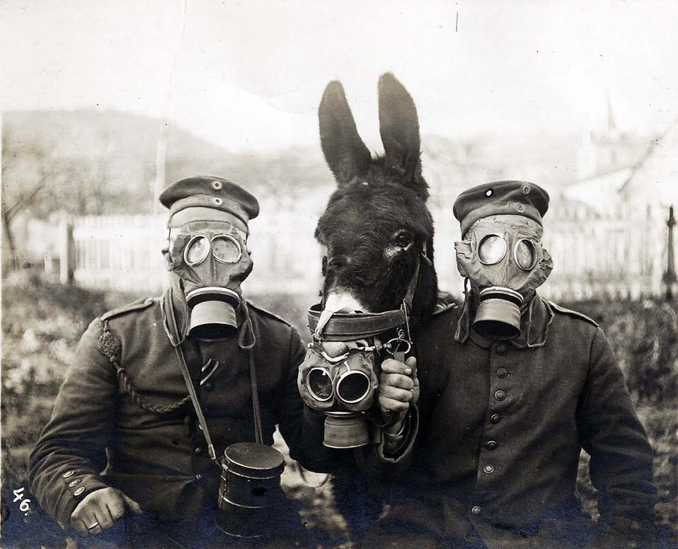 Two German soldiers and their mule wearing gas masks, 1916.jpeg