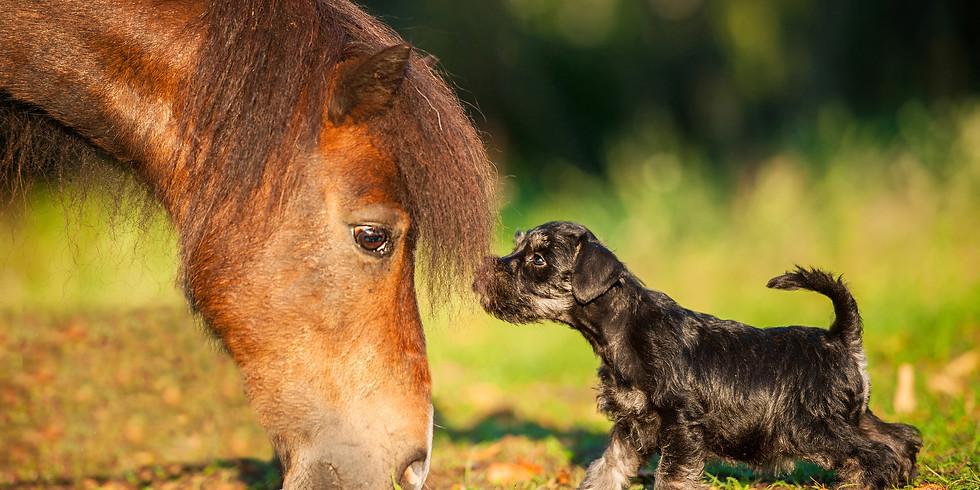 Erlebniswelt Pferd & Hund - EQUORIUS & BUNTE HUNDE
