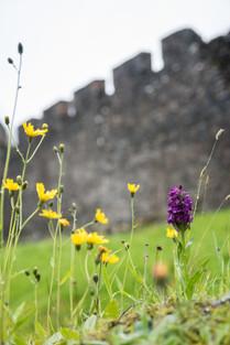 castle ruins, wildflowers