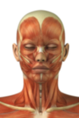 muscles of face female.jpg