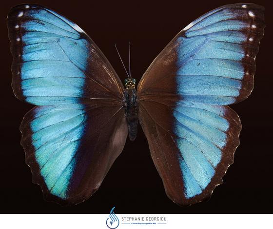 Το Φαινόμενο Της Πεταλούδας (Butterfly effect) - Θεωρία του Χάους (Chaos Theory)