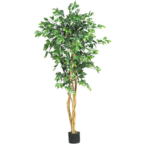 Ficus Tree w/ Twinkle Light