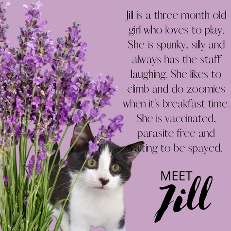 Jill is a three month old girl who loves to play. She is spunky, silly and always has the