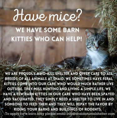 Have mice.jpg