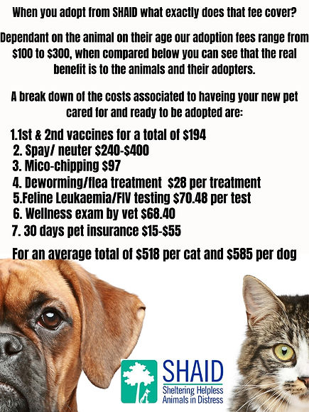 adoptin fee vs vet fees.jpg