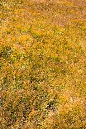 texture-Tracy-Durnell-field-golden-grass