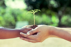 child-adult-hands-tree-copy.jpg