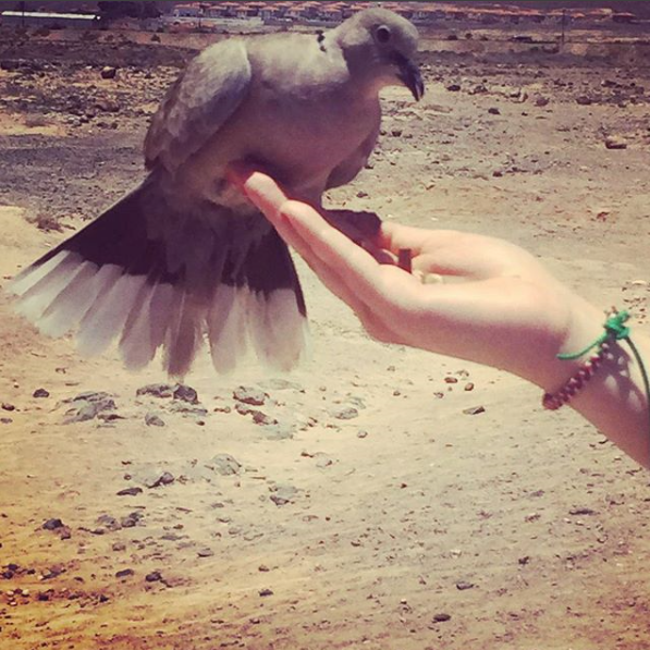A rock dove perches on a girl's outstretched hand and eats from her palm