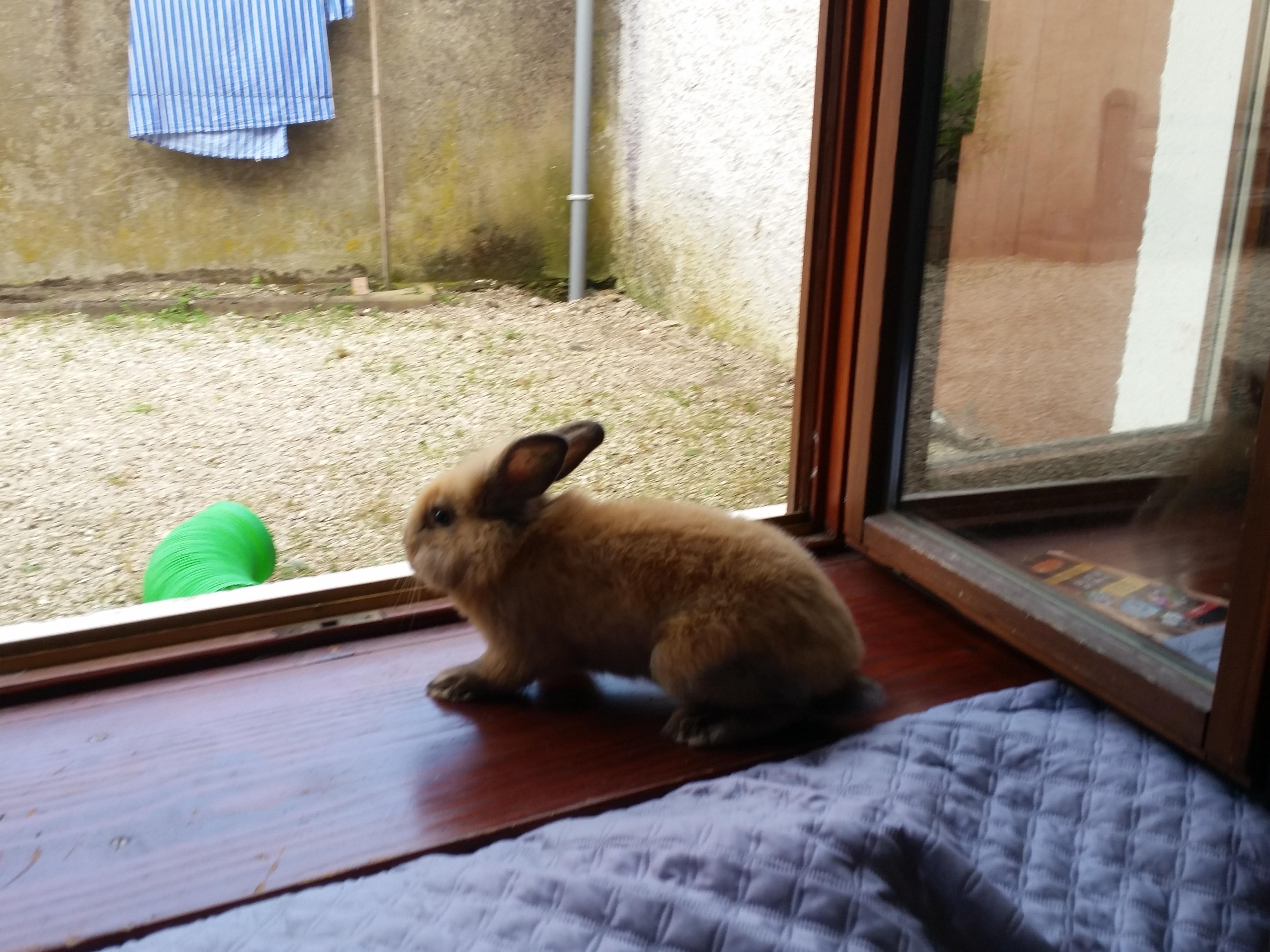 faire garder son lapin vers Besançon