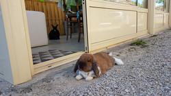 des lapins de gardes