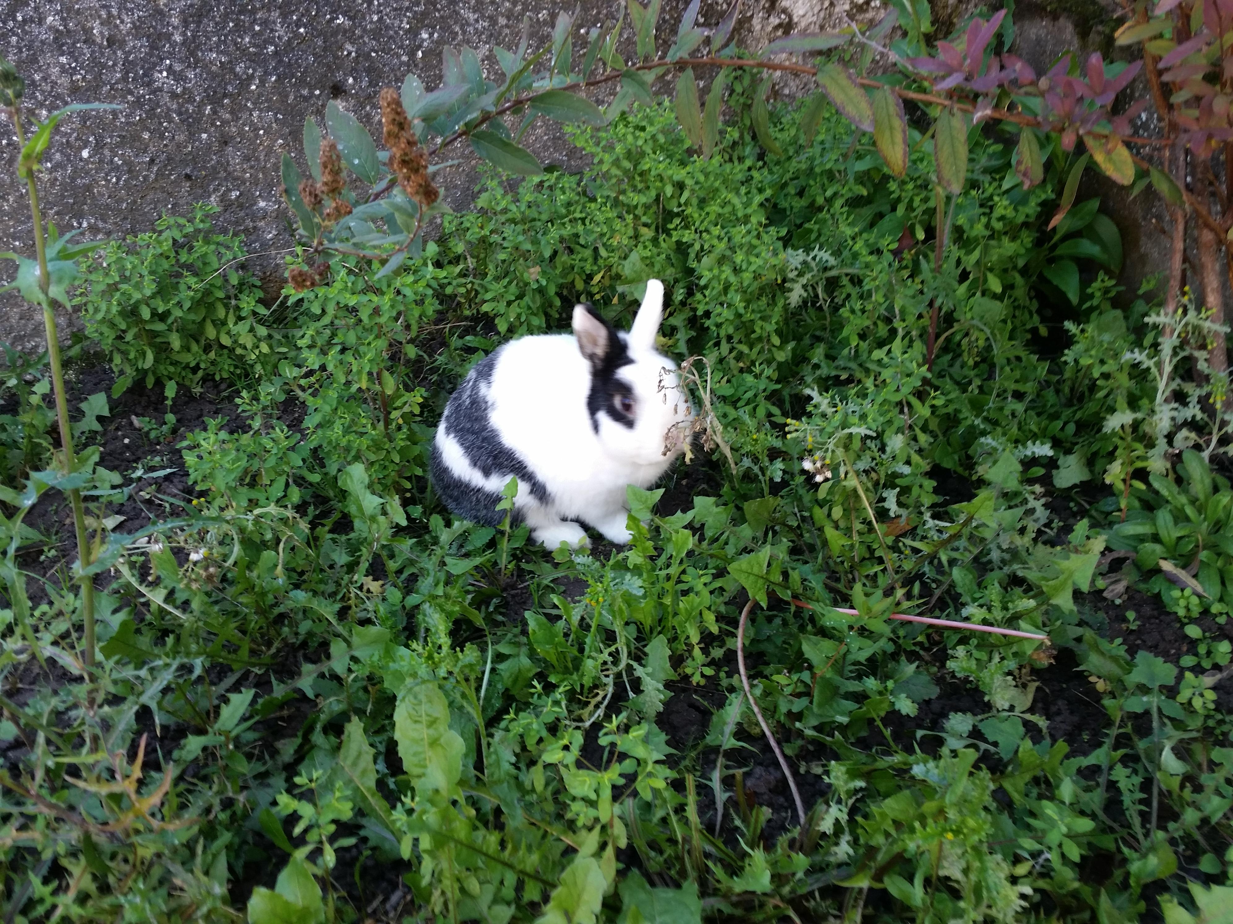 Garde de lapins nains France
