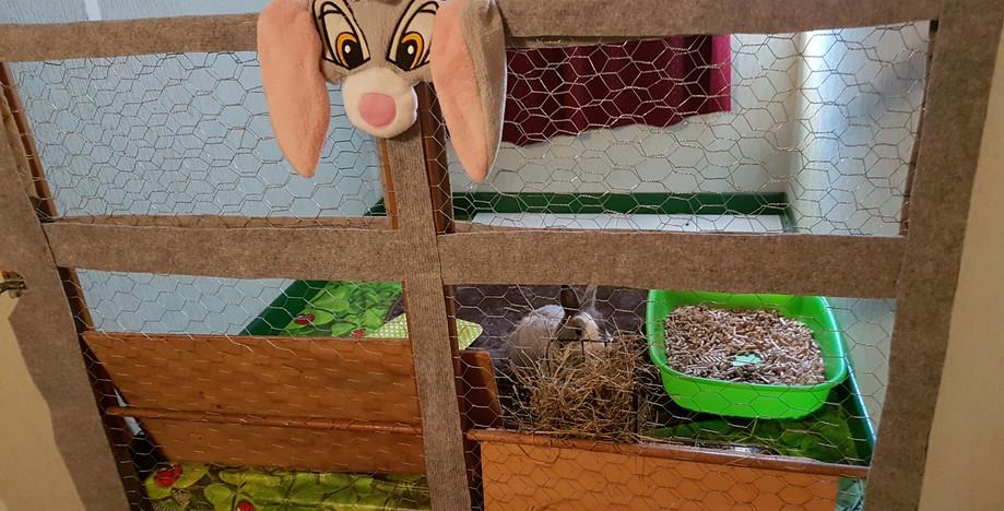 Votre lapin dans l'enclos