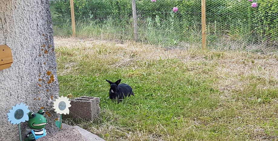 Babouchka profite du jardin