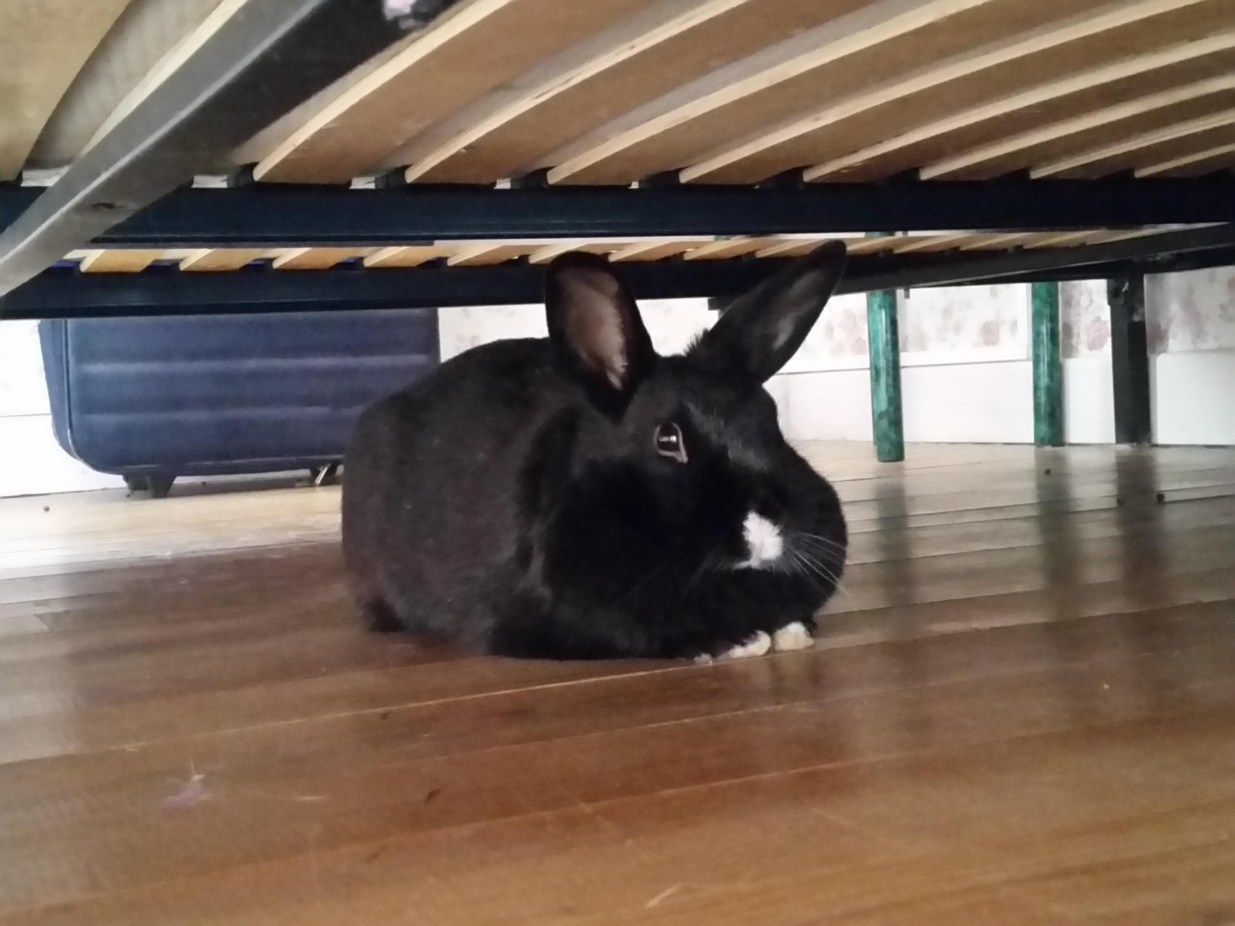 Garde de lapins nains Franche Comté