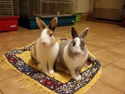 La Colo de Marjo pension lapins