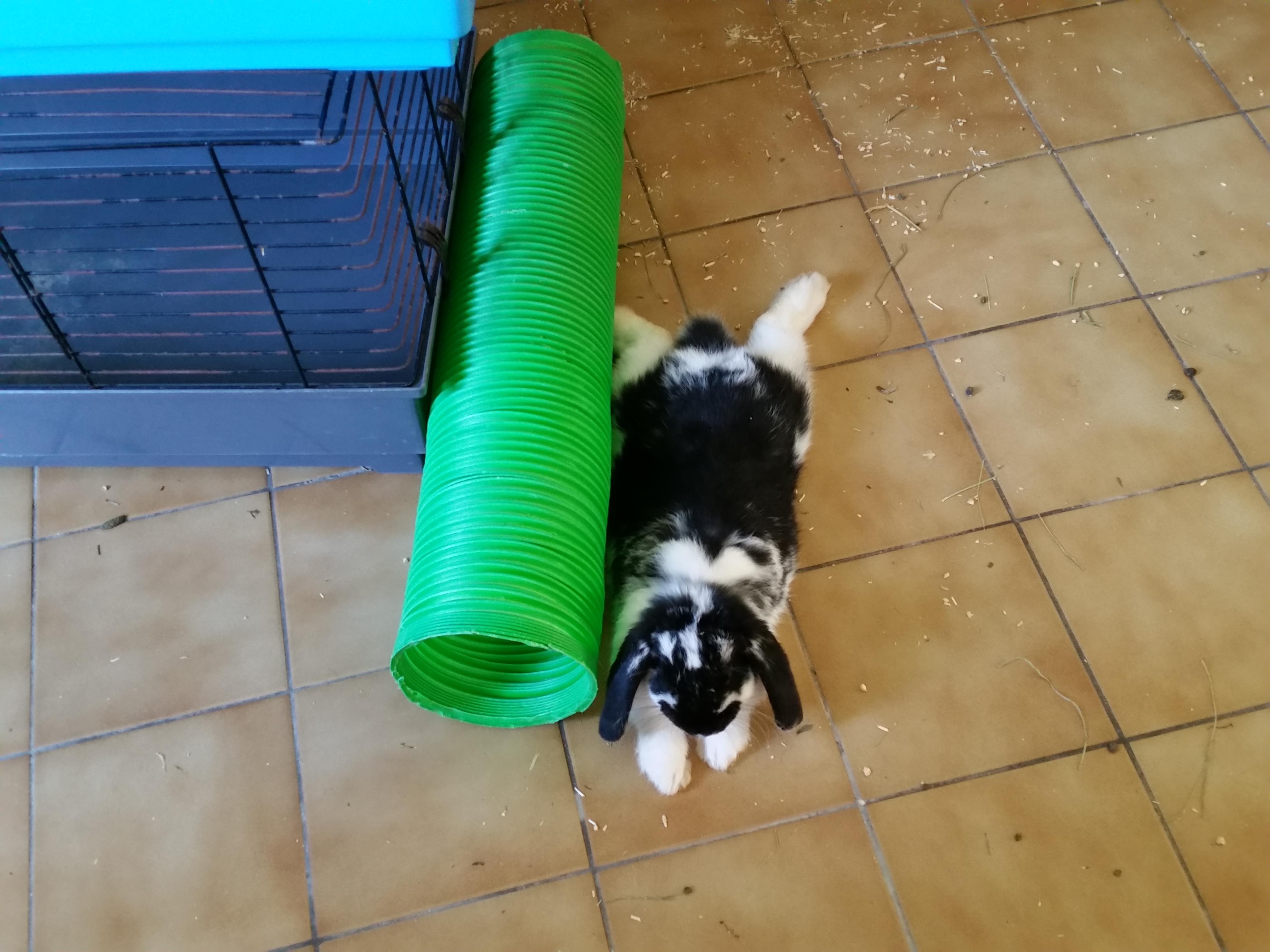Pension lapins nains près du 39