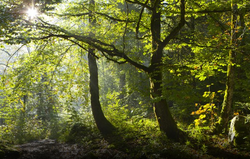 Forêt_de_la_Serre