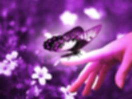 Purple-Butterflies-butterflies-35243885-