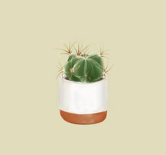 Prick Cactus