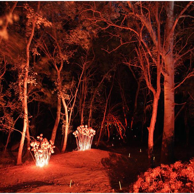 El bosque de Malfora