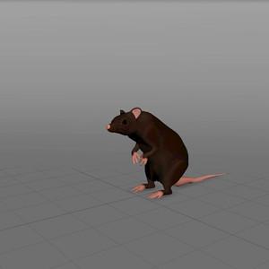 Sewer Rat Rig