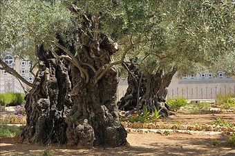 Garden+Gethsemane.jpg
