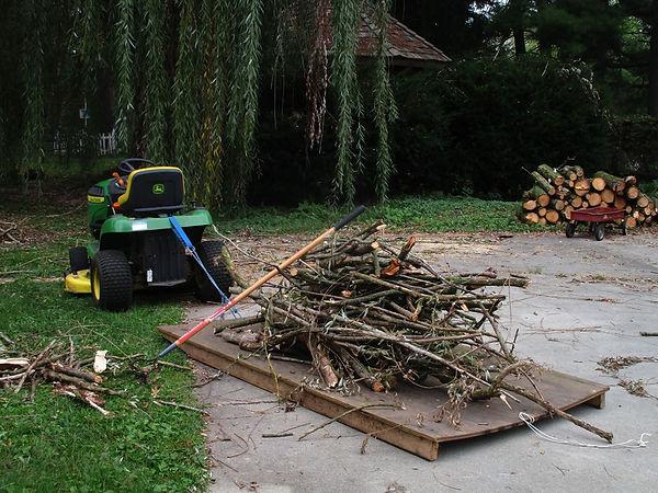 tree cleanup.jpg