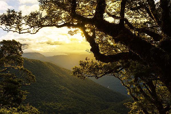 NZ beauty.jpg