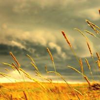 field-of-love-nature-31000.jpg
