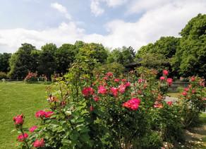 Le parc George Henri, un lieu qui possède bien plus qu'une seule âme.