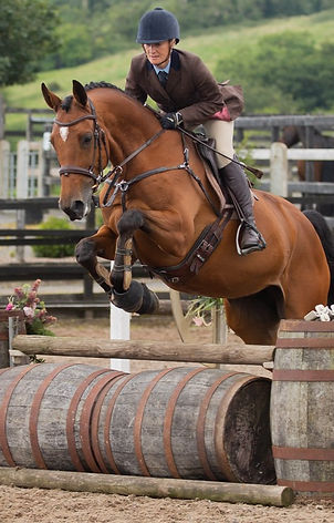 Working Hunter Equestrian Photography Bay Horse Northern Ireland