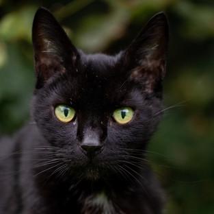 Black cat photography art Northern Ireland