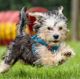 Mongrel puppy running puppy photography dog
