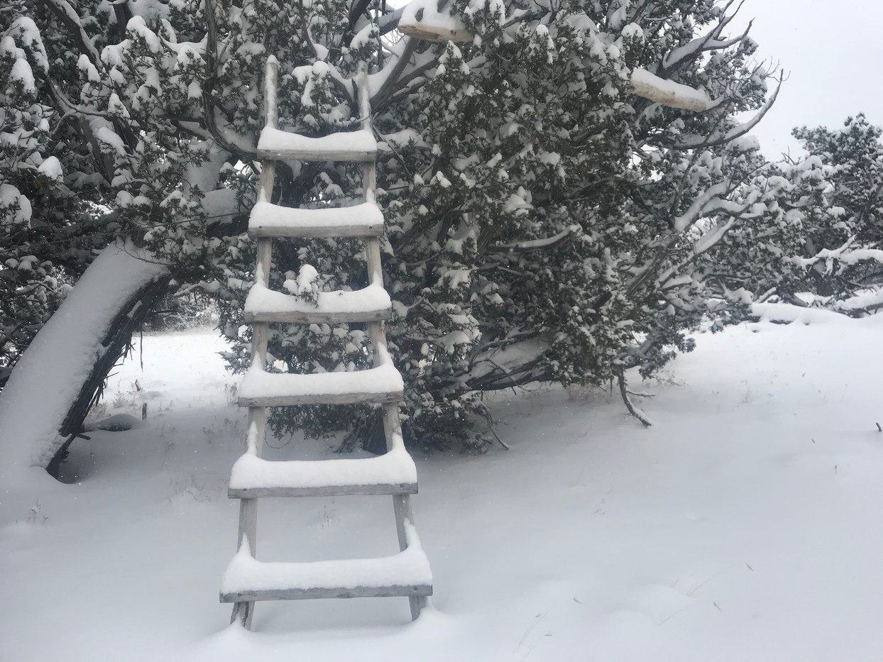 Snowed ladder.JPG