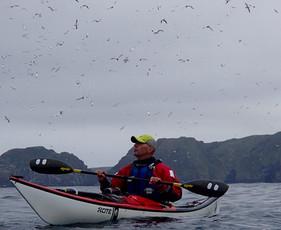 Sea birds!