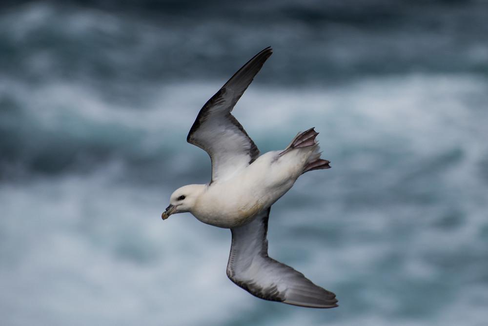 Shetland birding