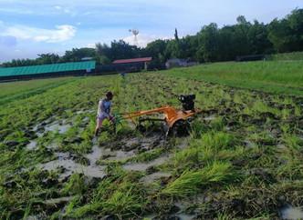 Abangan sa Lunes na! Blended Learning ng Rice Farm Mechanization at Inbred Rice Seeds Production Tra