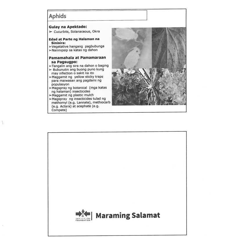 Pagkilala, Pamamahala at Pagsugpo sa mga Mahahalagang Pesteng Insekto ng Gulayjpg_Page9_Image1