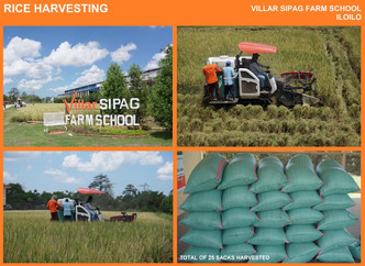 Villar SIPAG Farm School Iloilo Harvests its palay Friday with PhilMech Visayas. Modeling better Inb
