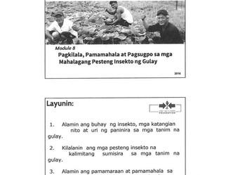 Pagkilala, Pamamahala at Pagsugpo sa mga Mahalagang Pesteng Insekto ng Gulay